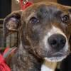 Meet Ava, Blue Ribbon News Pet of the Week