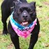 Meet Bagheera, Blue Ribbon News Pet of the Week
