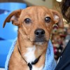 Meet Felix, Blue Ribbon News Pet of the Week