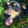 Meet Abel, Blue Ribbon News Pet of the Week