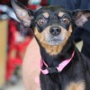 Meet Bonnie, Blue Ribbon News Pet of the Week