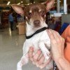Meet Latte, Blue Ribbon News Pet of the Week