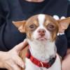 Meet Bruno, Blue Ribbon News Pet of the Week