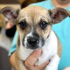 Meet George, Blue Ribbon News Pet of the Week