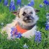 Meet Daphne, Blue Ribbon News Pet of the Week