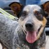 Meet Luna, Blue Ribbon News Pet of the Week