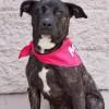 Meet Ruby, Blue Ribbon News Pet of the Week