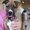 Meet Lucy Van Pelt, Blue Ribbon News Pet of the Week