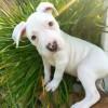 Meet Reeves, Blue Ribbon News Pet of the Week