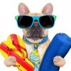 Celebrate Dog Days of Summer with your pet in Rockwall next weekend