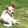 Meet Casper, Blue Ribbon News Pet of the Week