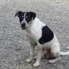 Meet Hunter, Blue Ribbon News Pet of the Week