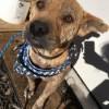 Meet Tipper, Blue Ribbon News Pet of the Week