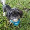 Meet Mr. Nibbles, Blue Ribbon News Pet of the Week