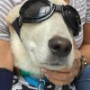 Meet Henry, Blue Ribbon News Pet of the Week