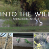 Free 'BioBlitz' event hosted by Rockwall County Open Space Alliance