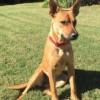 Meet Callie, Blue Ribbon News Pet of the Week