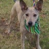 Meet Brink, Blue Ribbon News Pet of the Week