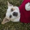 Meet Giblets, Blue Ribbon News Pet of the Week