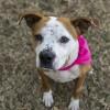 Meet Khloe, Blue Ribbon News Pet of the Week