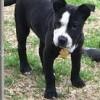 Meet Carmela, Blue Ribbon News Pet of the Week