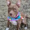 Meet Saylor, Blue Ribbon News Pet of the Week