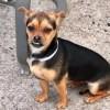 Meet Izzy, Blue Ribbon News Pet of the Week