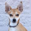 Meet Churro, Blue Ribbon News Pet of the Week
