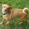 Meet Rosa, Blue Ribbon News Pet of the Week