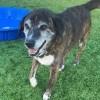 Meet Stella, Blue Ribbon News Pet of the Week