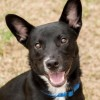 Meet Dylan, Blue Ribbon News Pet of the Week