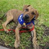 Meet Mickey, Blue Ribbon News Pet of the Week