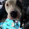 Meet Paulie Mac, Blue Ribbon News Pet of the Week