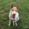 Meet Palmer, Blue Ribbon News Pet of the Week