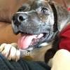 Meet Sturgil, Blue Ribbon News Pet of the Week