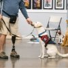 Patriot PAWS to hold Veteran/Service Dog Graduation at Hilton Saturday