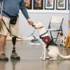 Patriot PAWS to hold Veteran/Service Dog Graduation at Hilton Saturday