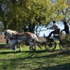 Black Star Sport Horses to Host Carriage Event November 3-4