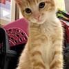 Meet Krueger, Blue Ribbon News Pet of the Week