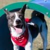 Meet Sterling, Blue Ribbon News Pet of the Week