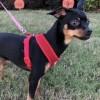 Meet Spaz, Blue Ribbon News Pet of the Week