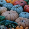 Of snakes & pumpkins: even a perfect fall day is better with prayer