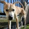 Meet Ace, Blue Ribbon News Pet of the Week