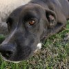 Meet Cowboy, Blue Ribbon News Pet of the Week