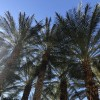 Lessons from a Palm Tree