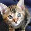 Meet Jolie, Blue Ribbon News Pet of the Week