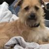 Meet Fozzie Bear, Blue Ribbon News Pet of the Week