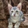 Meet Grayson, Blue Ribbon News Pet of the Week