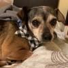 Meet Leo, Blue Ribbon News Pet of the Week