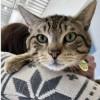 Meet Frankie Valli, Blue Ribbon News Pet of the Week